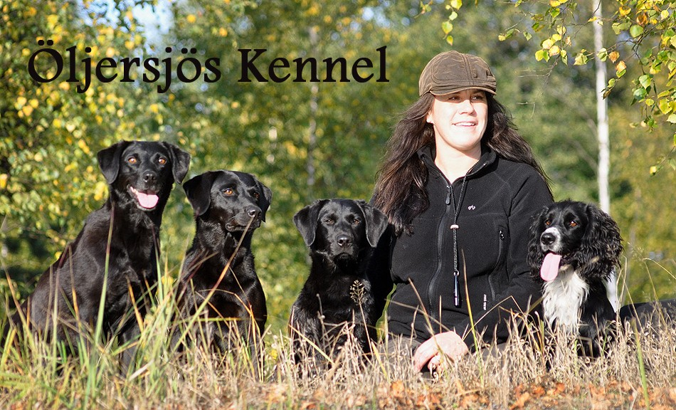 oljersjo-kennel